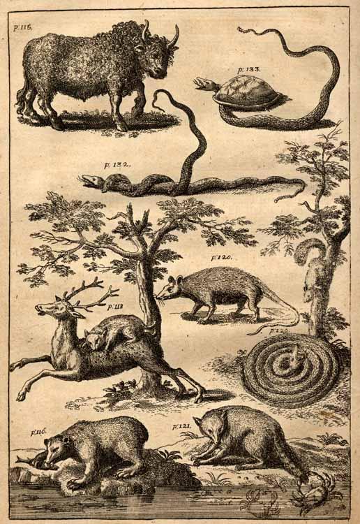 Lawson_animals